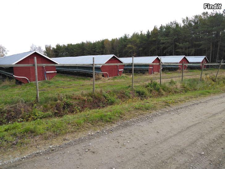 Säljes Till salu Pälsfarm på Ytteresse Farmområde